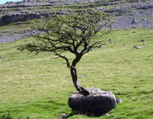 Yorkshire Dales scenery